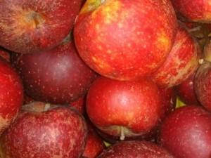 Æbler på Farmers Market