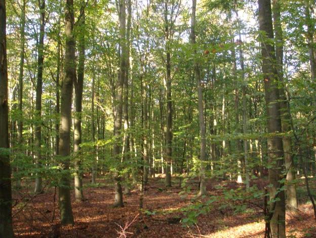 Vandretur i Alsted Skov