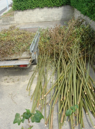 Sådan ser nyhøstet pil ud