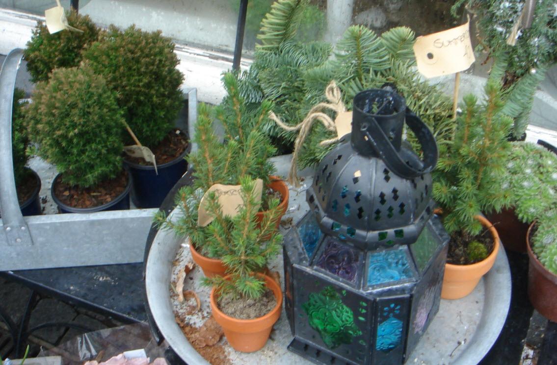Sukkertoppe og andet stedsegrønt hos Frk. Flora