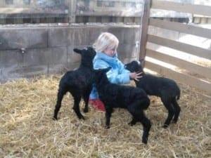 fårets dag