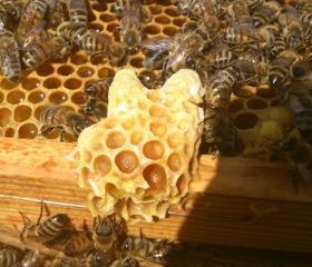 Spis Sorø - nu med bier