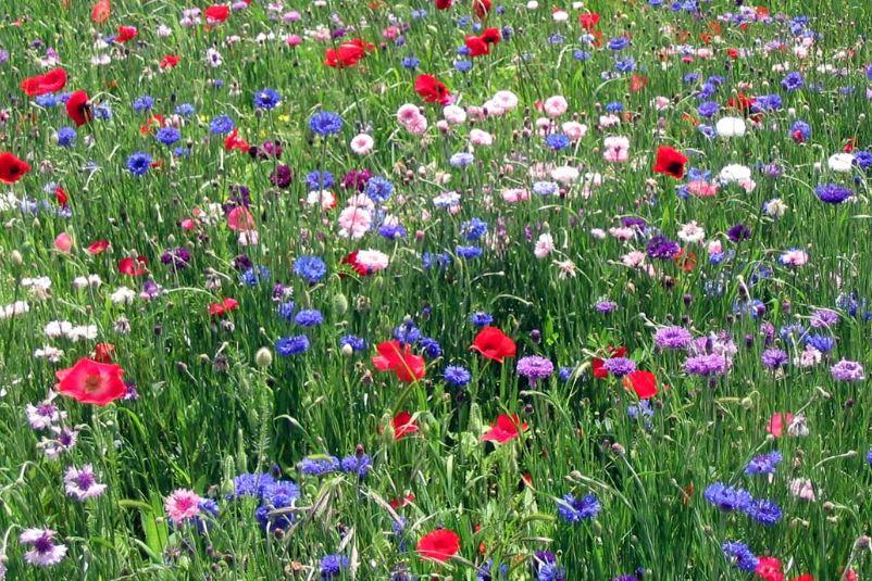 Fra frø til skønne blomster