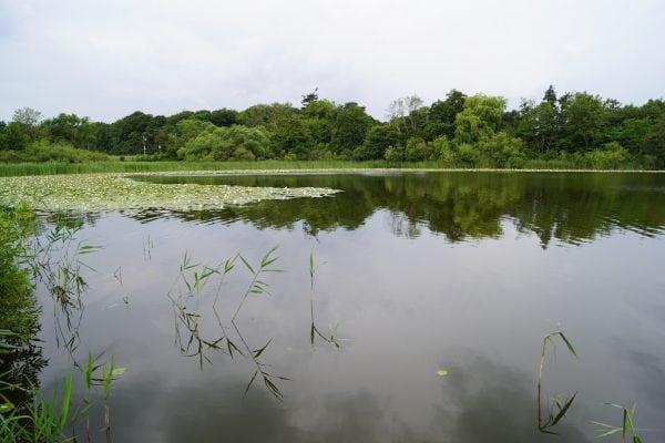Pedersborg Sø
