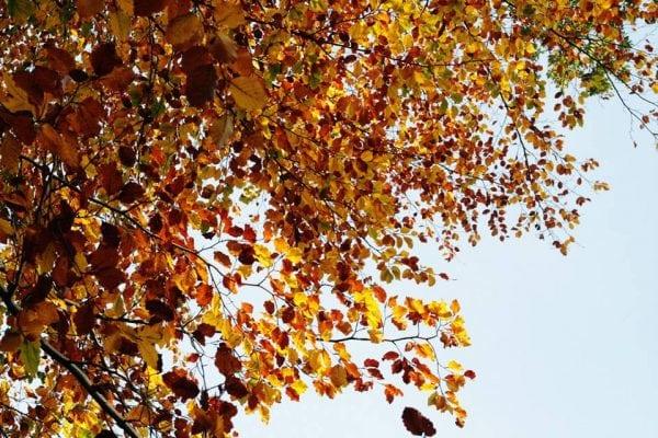 Efterår i Sorø