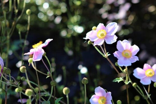 Blomstrende detaljer i Sorø