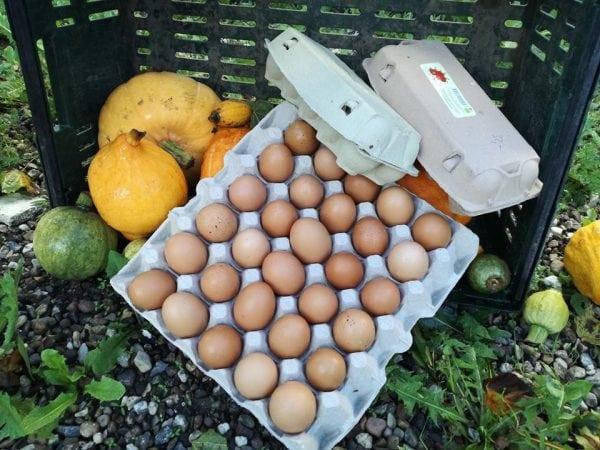 Æggebod ved Skotte & Stentoft