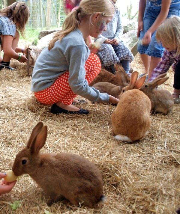 Sjov for børn i Birkegårdens Haver