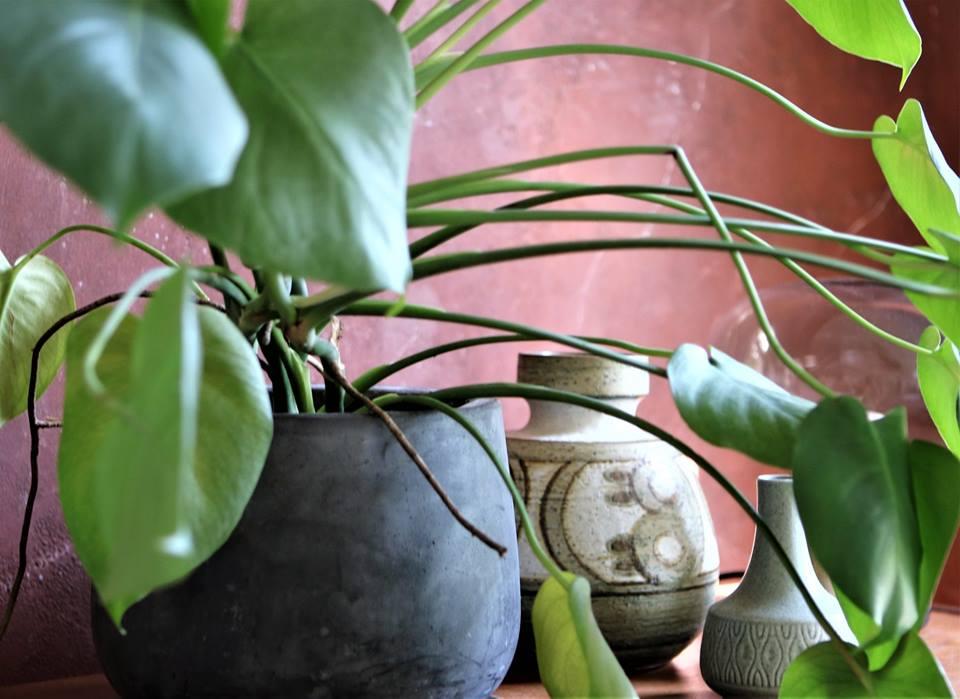 Grønne stueplanter halv pris