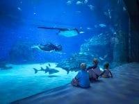Glubske hammerhajer og majestætiske rokker glider forbi i den 4,1 millioner liter store Oceantank i Den Blå Planet, mens børnene ser på. Pressefoto: Bjarke Maccarthy.