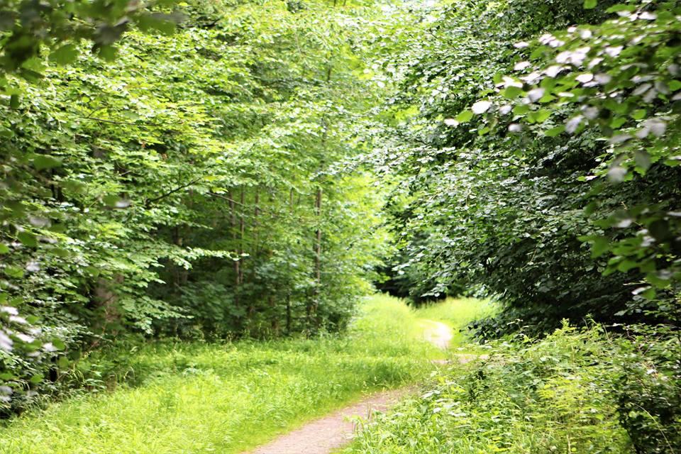 Sensommervandring i Grydebjerg Skov