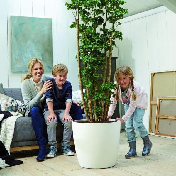 Ny tilbudsavis fra Midtsjællands Planteskole