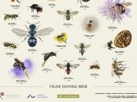 Vilde danske bier, Plakat: KU