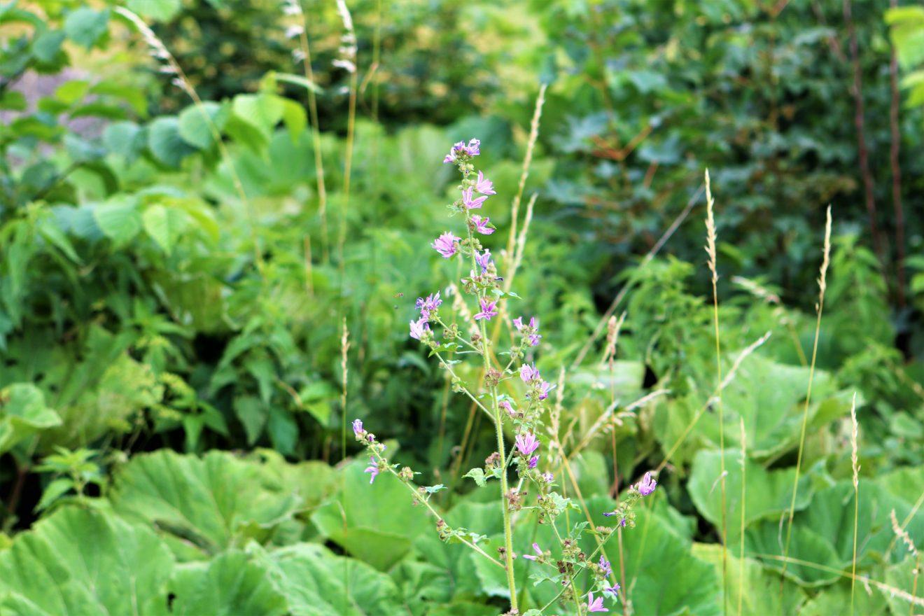 Borgere skal kortlægge oplevelser i Naturpark Åmosen